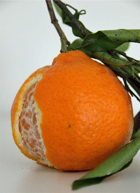 mandarinen und clementinen unterschied