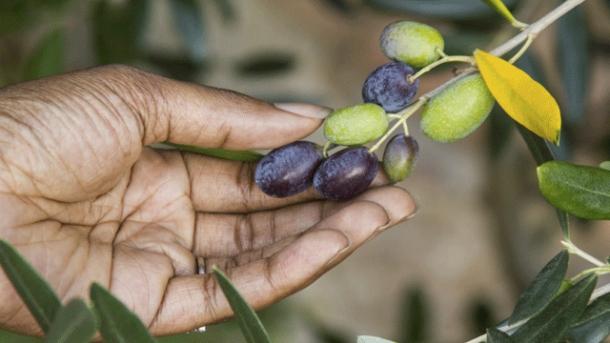Berühmt Werden schwarze Oliven gefärbt? - worlds of food - Kochen Rezepte @TA_93