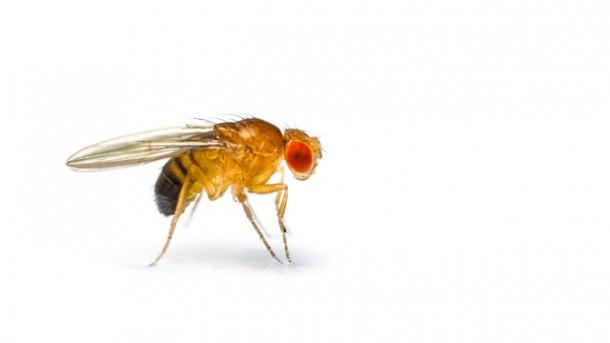 Hilfe gegen fliegen was hilft gegen fliegen auf der for Fruchtfliegen im blumentopf